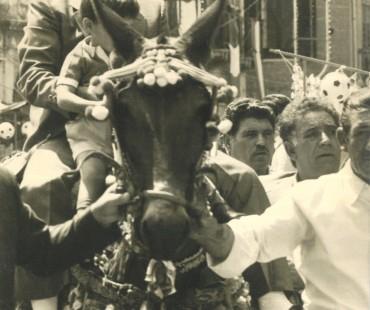 Bambino a cavallo di un mulo durante la sfilata